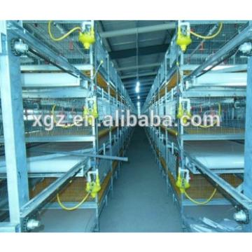 chicken egg poultry farm