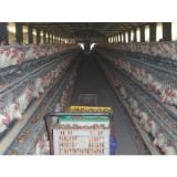 Low-cost Layer Egg Chicken Cage/Poultry Farm House Designs