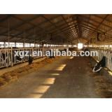 modern specialized cow cattle farm